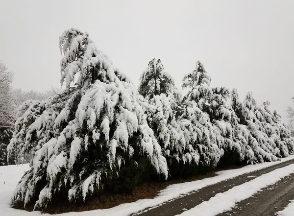Pines of the Time Snow Nature Outdoors Landscape Mountain Day Cold Temperature Tranquility Winter No People Tree Beauty In Nature Scenics Sky