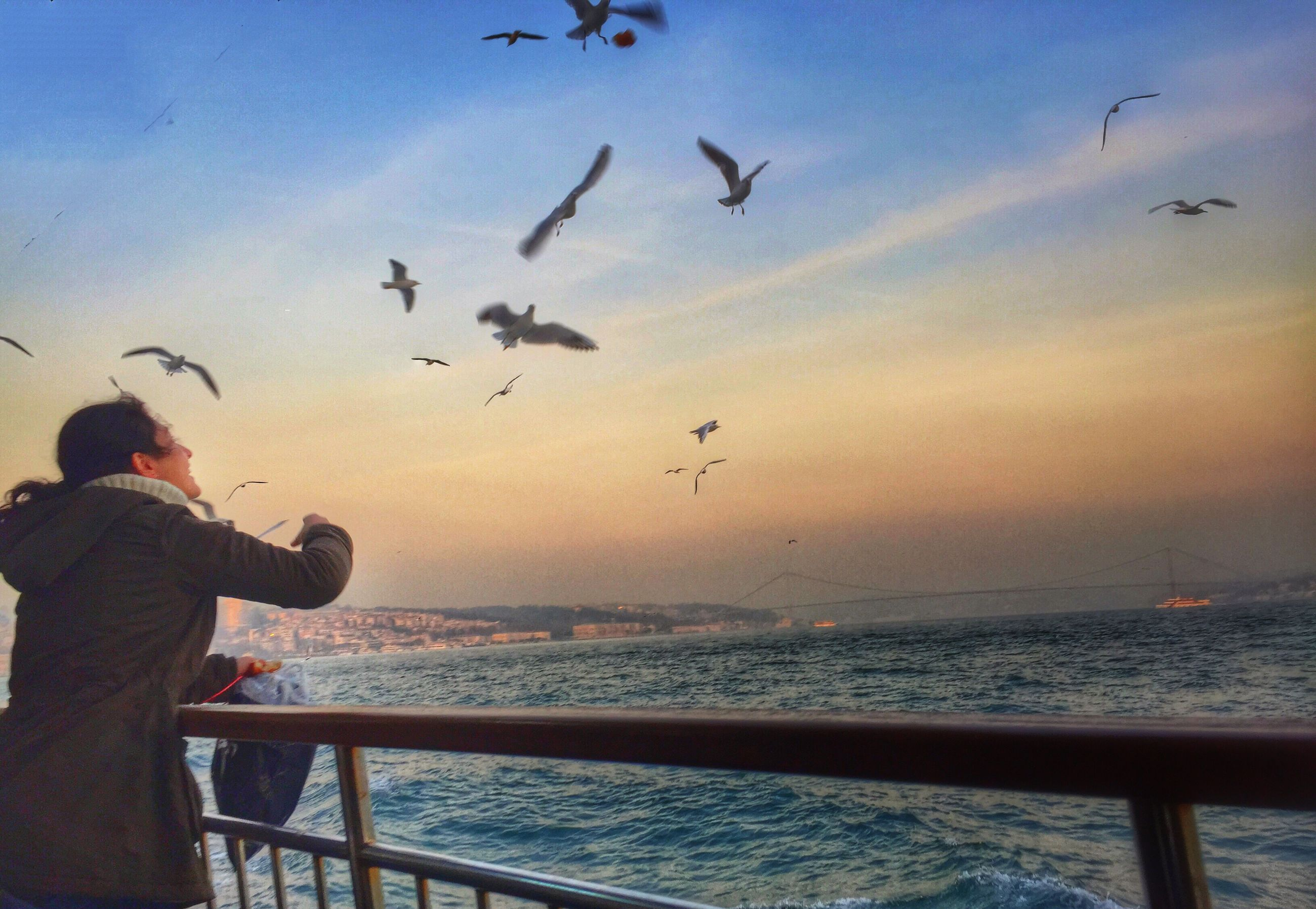 bird, sea, animals in the wild, animal themes, water, flying, wildlife, horizon over water, sky, flock of birds, silhouette, sunset, beach, nature, scenics, seagull, lifestyles