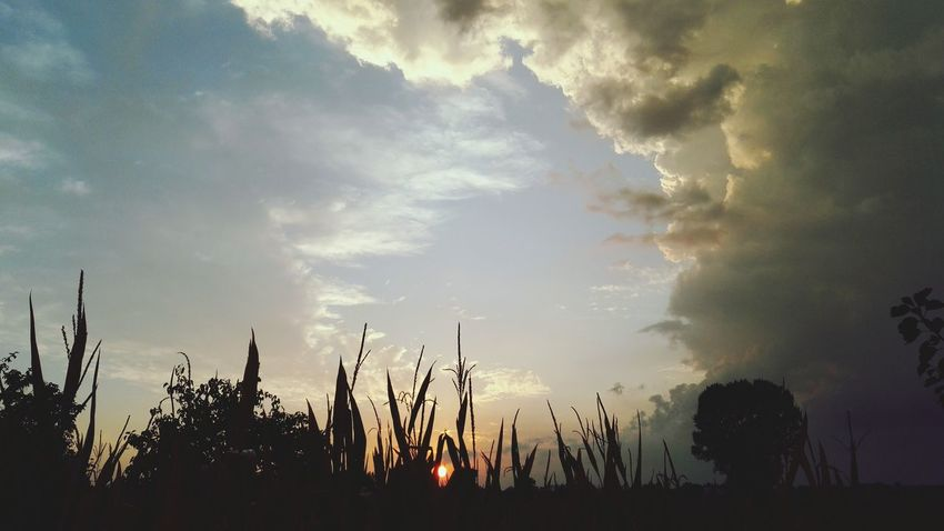 Sunset Nature Silhouette Landscape Plant Sky Social Issues Outdoors No People Beauty In Nature Day