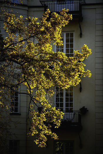 Architecture Building Building Exterior Built Structure Day Flower Flowering Plant Fragility Freshness Growth House Nature No People Outdoors Plant Residential District Tree Vulnerability  Window Yellow