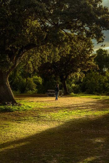 Rear view of woman walking on field by trees