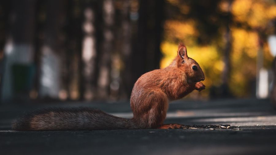 Bella Minimalism No People Representation Animal Representation Animal Themes Close-up Animal Toy One Animal Focus On Foreground Day Animal Wildlife Nature Selective Focus Mammal Brown Sunlight Art And Craft Animals In The Wild Outdoors Squirrel