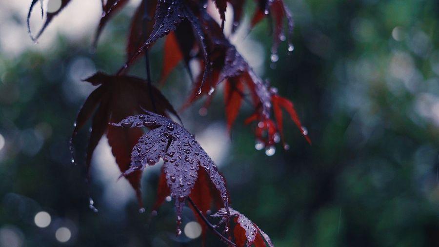 RainDrop Animal