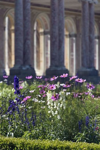 Flower Architectural Column Flowerbed Flower Head History Architecture Close-up Built Structure