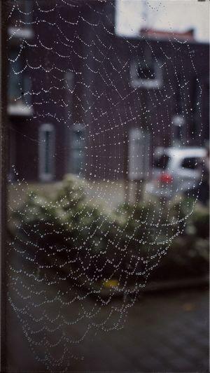 EyeEmBestPics Photography] EyeEm Masterclass Up Close And PersonalcRows Of ThingsnSpider's Webhings Spider's EyeEm Best ShotssEyeEm Gallery