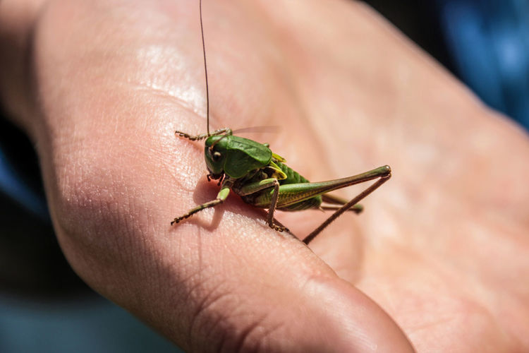 Cropped hand with grasshopper on sunny day