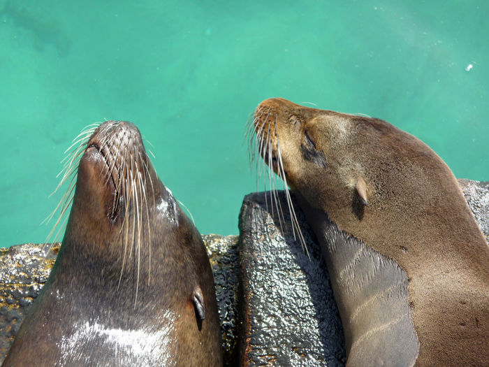 Close-up of sea lions blissfully relaxing