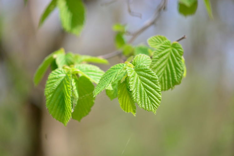 Leaf Plant Part Plant Green Color Close-up Growth Beauty In Nature Nature Focus On Foreground Selective Focus No People Herb Day Outdoors Freshness Medicine Tree Food And Drink Herbal Medicine Food