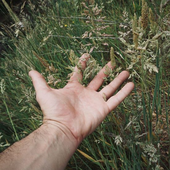 Cropped hand of man holding plants