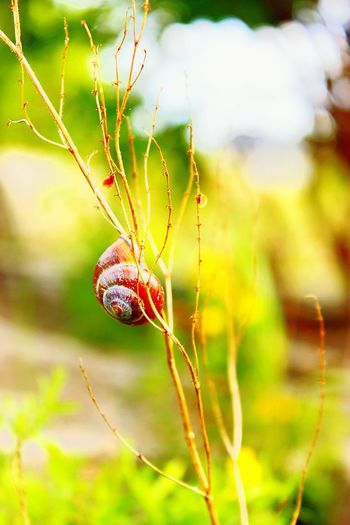 Focus On Foreground Day No People Close-up Outdoors Nature Animal Themes Trapped Slugs And Snails Animal Wildlife Sunlight The Week On EyeEm Sommerfeeling Sommergefühle Slug Snail Bugs Nature Creatures Nature Pet Portraits Green Color Reflection One Animal Paint The Town Yellow