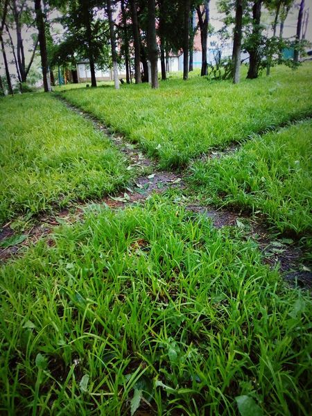 Your choice Cross Crossroads Pathways Grass Trees Green Morning Choice Chosen Paths Path Paths Angles Angles And Lines