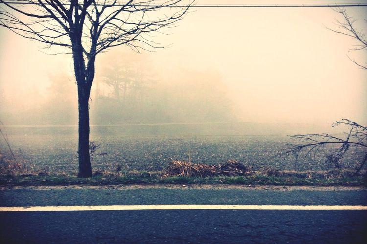 Driving... Beautiful Smog Street Photography Mood