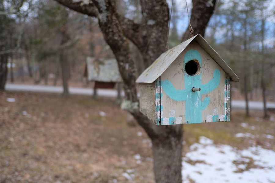 Woodstock Birdhouse Woodstock, NY  Birdhouse Focus On Foreground Tree Day Built Structure No People Architecture Outdoors