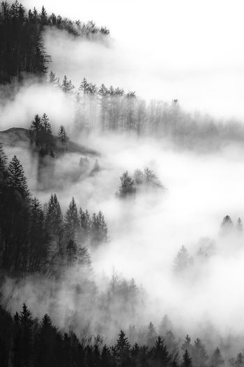 Aerial view of trees amidst fog