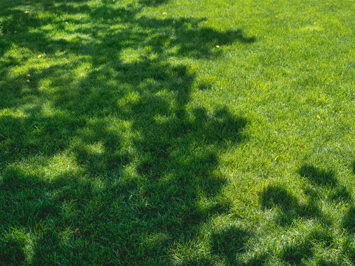 High angle view of shadow on grass in field