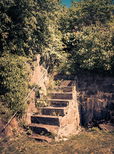 Tilt image of old staircase by trees