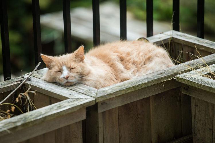 Cat sleeping on railing