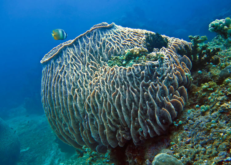 Fish swimming by coral underwater