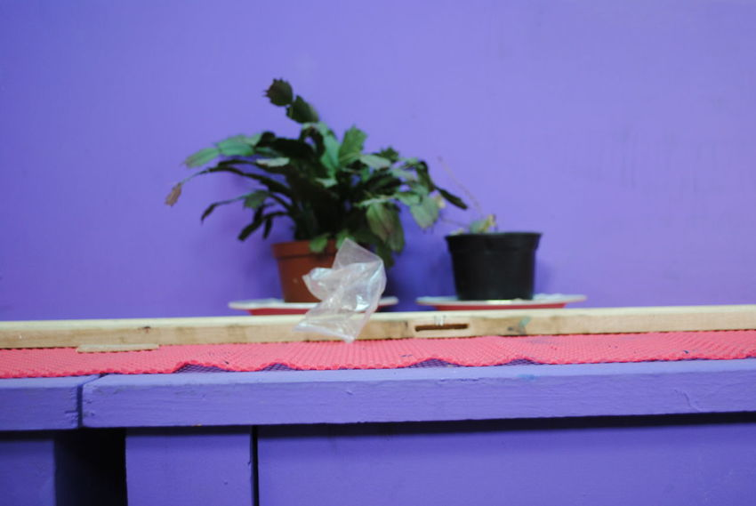 Close-up Colorful Colors Flower Growth Indoors  Plant Purple Still Life StillLife StillLifePhotography Synthesis