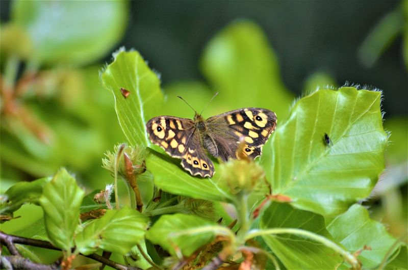 Animal Themes Animal One Animal Animal Wildlife Animals In The Wild Plant Part Invertebrate Leaf Insect Green Color Plant Butterfly - Insect Animal Wing Beauty In Nature Close-up Nature No People Flower Day Animal Body Part Outdoors Butterfly