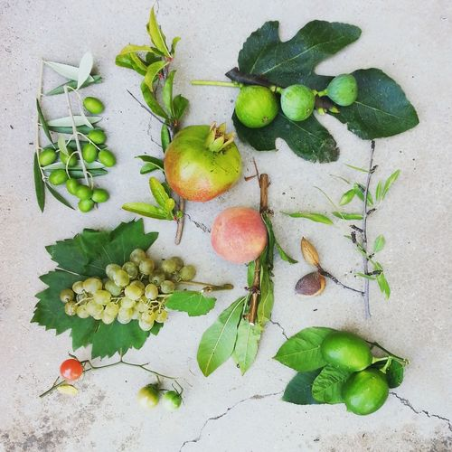 garden goodness EyeEm Nature Lover EyeEm Gallery Fresh Produce Olive Close-up Collection Day Fig Flatlay Food Food And Drink Freshness Fruit Fruits Grapes Green Color Growing Plants Growth Healthy Eating Leaf Nature No People Outdoors Pomegranate
