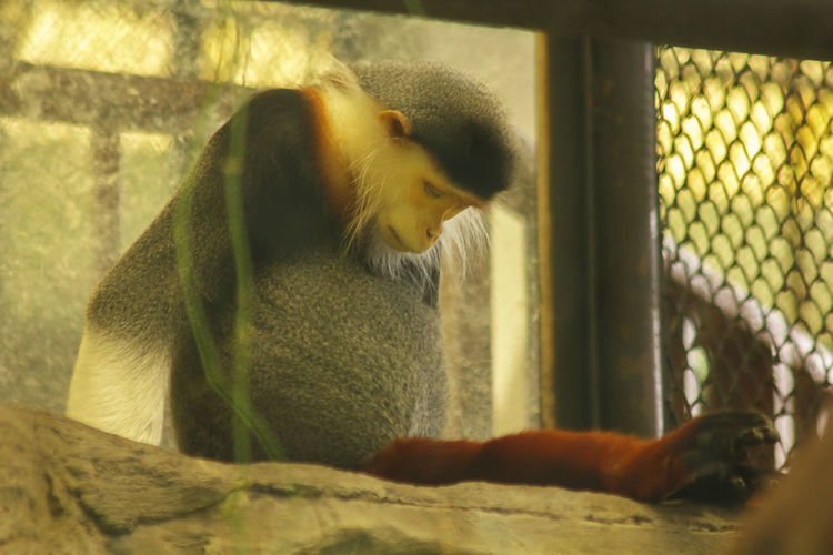 Side view of monkey sitting in cage at zoo