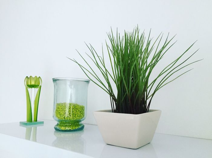 Green Color Potted Plant Plant Growth No People Table Desk Organizer Indoors  Nature Freshness White Background Day