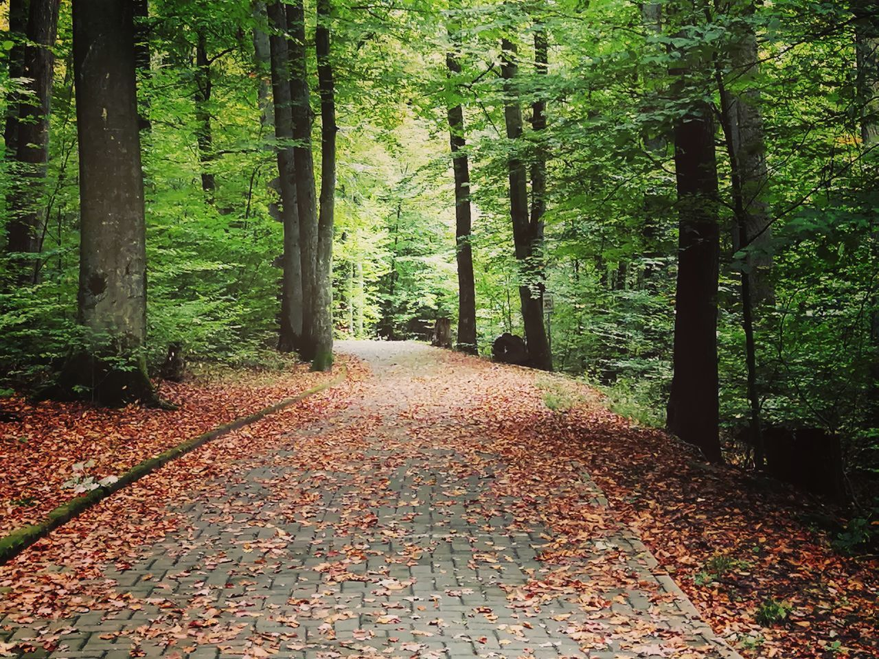 FOOTPATH AMIDST LEAVES IN FOREST