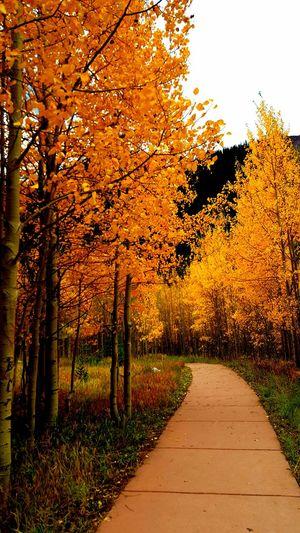 Autumn Autumn Leaves Autumn Colors Maroonbells Tree Nature Outdoors Leaf Day