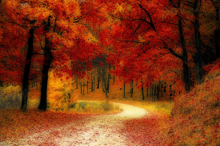 Autumns Colors shown in orton effect Autumn Beauty In Nature Change Close-up Day Growth Horizontal Leaf Leaves Nature No People Orange Color Orton Effect Outdoors Path Red Road Rural Rural Scene Tranquility Tree