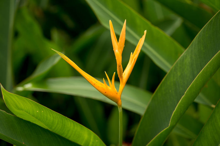 Growth Plant Beauty In Nature Green Color Plant Part Close-up Leaf Nature No People Day Freshness Vulnerability  Fragility Orange Color Focus On Foreground Bird Of Paradise - Plant Flower Flowering Plant Selective Focus Outdoors Flower Head