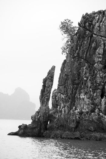 Water Rock Sea Sky Rock - Object Nature Rock Formation Clear Sky Beauty In Nature Solid Tranquility Scenics - Nature No People Day Tranquil Scene Waterfront Outdoors Tree Cliff Stack Rock Formation Eroded Ha Long Bay