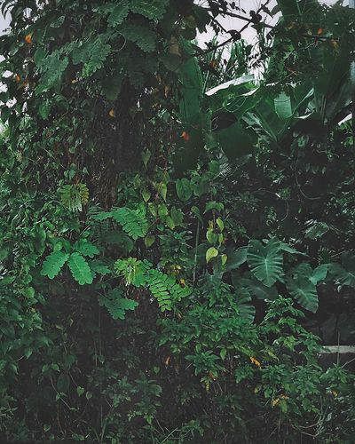 Green Color Full Frame Plant No People Backgrounds Tree Growth Plant Part Built Structure Pattern Low Angle View Outdoors Leaf Wall - Building Feature Day Branch Nature Beauty In Nature Architecture Close-up