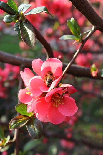 Bee's beautiful