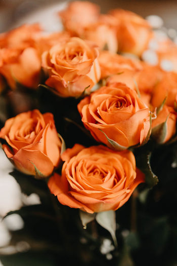 Flower Head Inflorescence Nature Orange Color Focus On Foreground Fragility Vulnerability  Close-up Freshness Beauty In Nature Coral Colored No People Day Rosé Petal Rose - Flower Flowering Plant Flower Plant Growth Bouquet Flower Arrangement