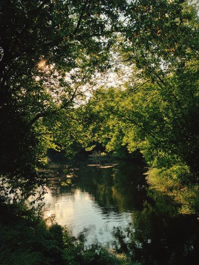 Summer in the city Berlin Summer Nature EyeEm Nature Lover Nature_collection Sunset Trees Lake Water Reflections Green