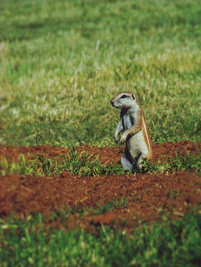Enjoying Life EyeEm First Photo Nature Amateur Photography Squirrel Naturelovers Amateurphotographer  First Eyeem Photo