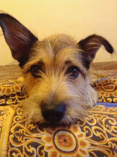 Dog Mydogs Ilovemydog собака пес МояСобака люблюего