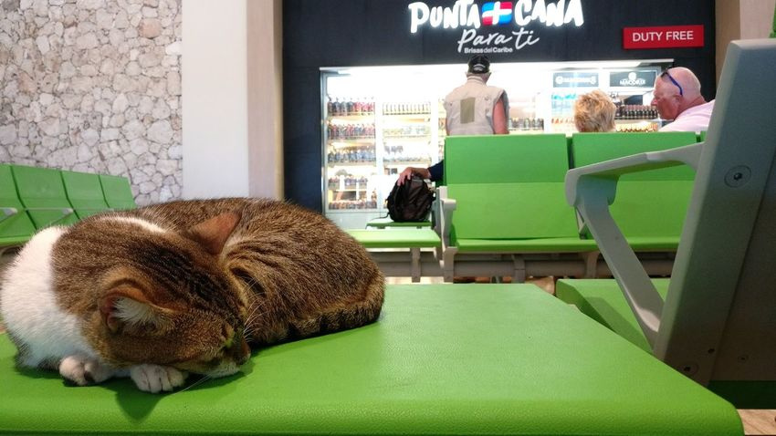 Tired Of Waiting Punta Cana Punta Cana Airport Mammal Cat Sleeping Sleepy Airport Green Cat Sleeping In Weird Places Waiting Area Waiting At The Airport Adapted To The City Miles Away
