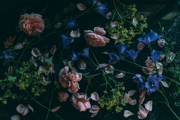 Abandoned Artistic Atmosphere Atmospheric Atmospheric Mood Fading Beauty Blue Flowers Close-up Flower Sommergefühle Flower Head Backgrounds Fragility Indoors  Horizontal Leaf Mess Mess Up Messy Mood No People Patels Petal Pink Rose Roses