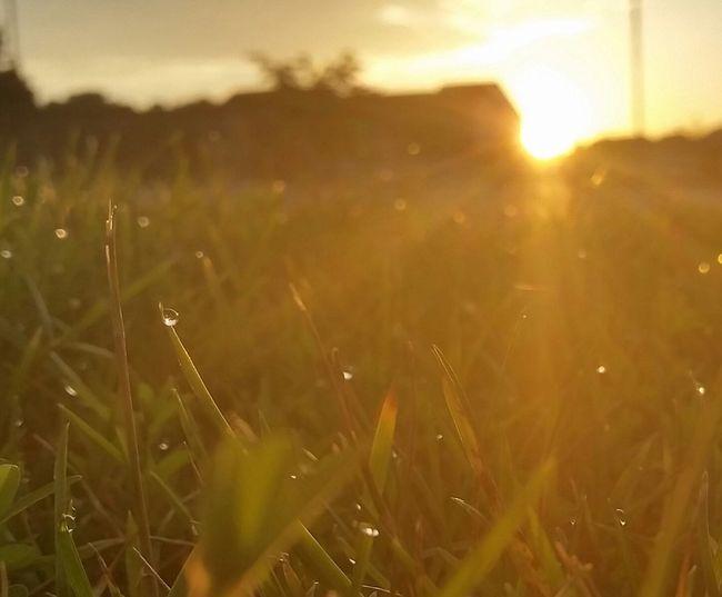 Water Drops Water Drop Grass Grassland Grass And Sky Grass And Sun Grass And Sunrise Morning Sunrise Morning Light Morning Sun Morning Glow Morning View Morning Sky