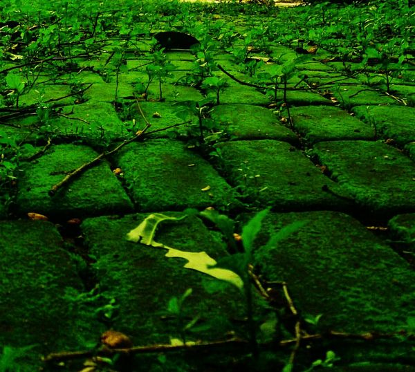 Deceptively Simple Naturelover Brickpathways Green