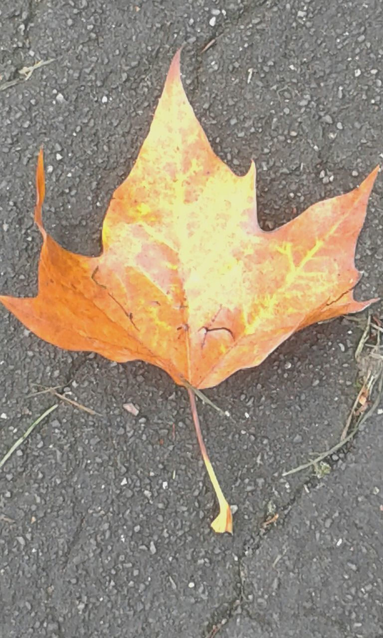 leaf, autumn, change, outdoors, dry, nature, maple leaf, maple, yellow, day, close-up, no people, beauty in nature