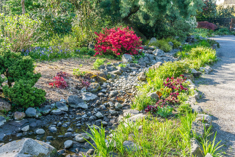 View of flowering plants in garden