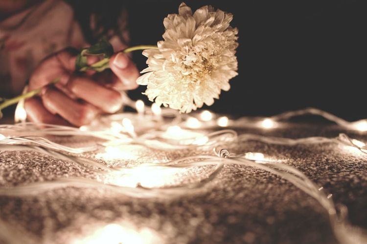 Cropped image of woman holding white chrysanthemum by illuminated string light on fabric