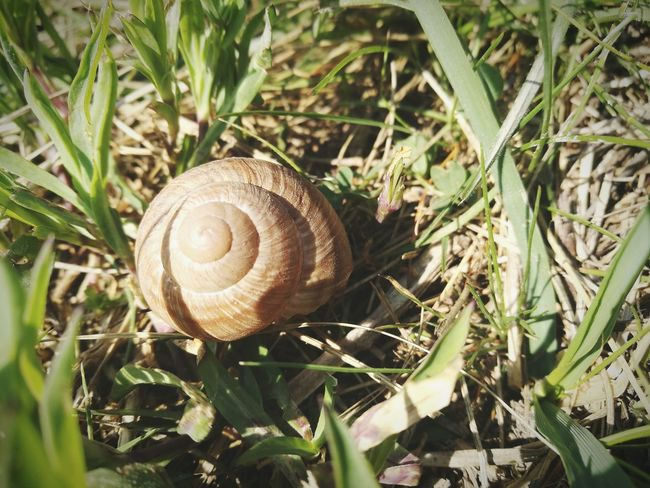 Snail One Animal Animal Themes Shell Grass Wildlife Nature Animal Shell Fragility Gastropod Animals In The Wild Close-up No People Outdoors Day HuaweiP9 Backgrounds Green Color EyeEm Best Shots EyeEm Masterclass Wildflower Growth Beauty In Nature Nature Blooming EyeEmNewHere Long Goodbye