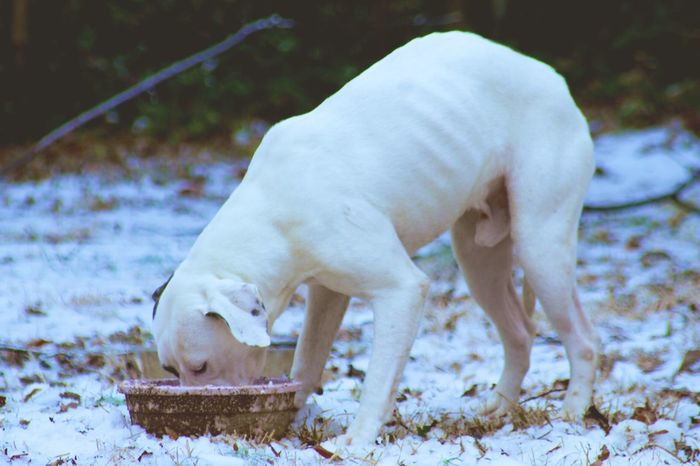 Cold Kilo Photography Hungry 1glamourstudios Msnikkiblanco Mammal Snow Animal Themes Cold Temperature Winter Domestic Animals Shades Of Winter White Color Dog Pets Outdoors Nature Shades Of Winter