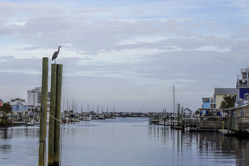 Heron Chilin' in Marina Beauty In Nature Blue Heron Bird Boats In Marina. Built Structure Carolina Beach Marina Carolina Beach, NC Heron Marina Outdoors Sky Sony 35mm 1.8 Sony A6000 Water Water Reflections
