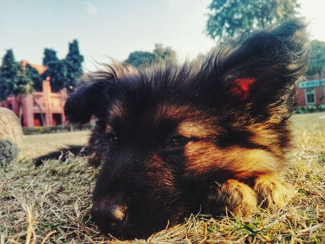 Thuglife Relaxing Cute Dogs Dogstyle Eye Em Nature Lover Check This Out Hello World Rural_love Samantha