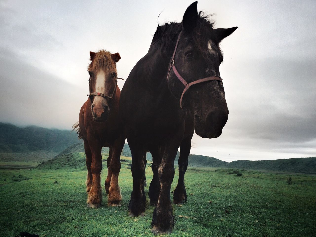 Low angle view of horses on grassy field